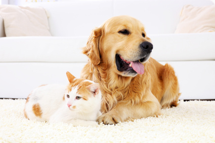 We love our pets, but not always what they do to our Carpet & Upholstery. Even the best dogs and cats can sometimes have accidents or get sick.